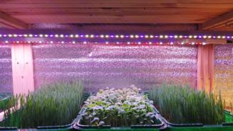 Мощный фитосветильник для рассады, зелени и микрозелени. Фитолампа для растений.
