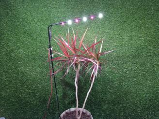 Led фитосветильник на базе полноспектральных и белых светодиодов для освещения комнатных растений в  горшках